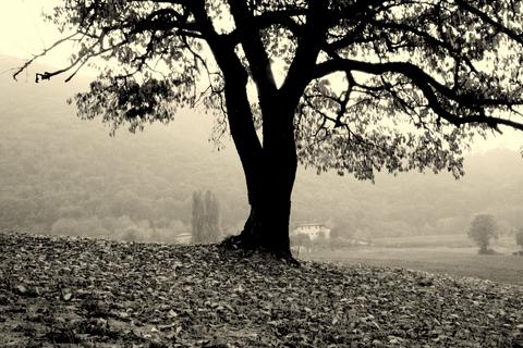 creepytreestockphotoforhorrorboom